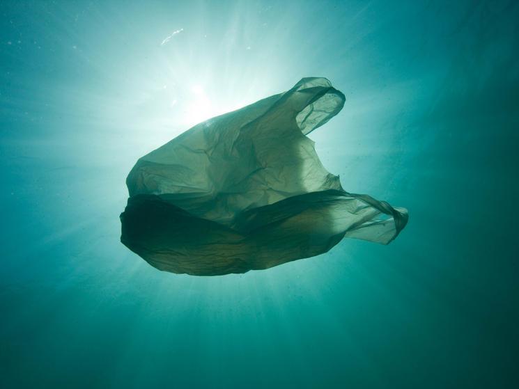 A Roadmap for the Plastic Revolution