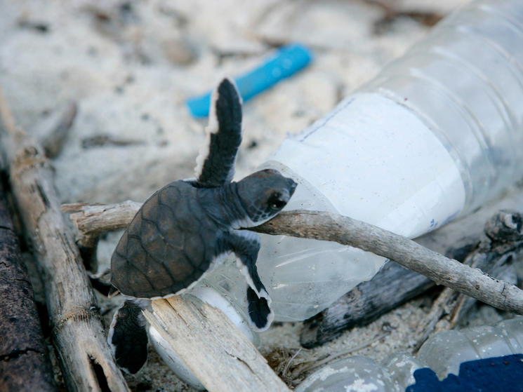Sustainability Works: Amcor, Colgate-Palmolive, and Kimberly-Clark Join ReSource: Plastic